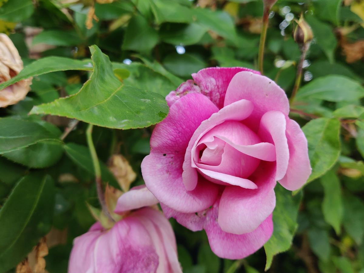 La Rosa del tempo, visita al Bosco di Alvisopoli